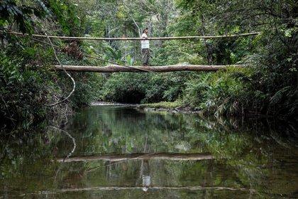 """El Bosque Atlántico (""""Mata Atlântica"""", en portugués) es uno de los biomas más ricos en biodiversidad de fauna y flora de Brasil (EFE/Sebastião Moreira/Archivo)"""