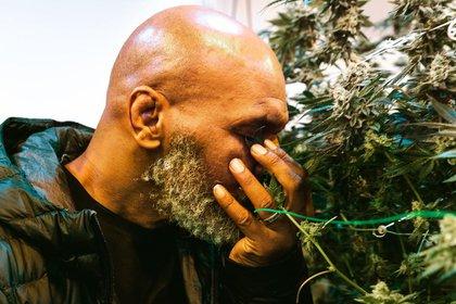 Tyson lidera un proyecto de cannabis en California (IG: @tysonranchofficial)