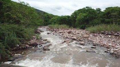 El Parque Nacional Calilegua posee una superficie de 76.306 hectáreas y está ubicado en el Departamento Ledesma, en el sudeste de Jujuy