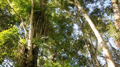 El objetivo es evitar la deforestación mediante la compra agrupada de propiedades con bosques nativos. Importantes empresas e incluso PyMES ya neutralizan su huella de carbono con la entidad. (Banco de Bosques)
