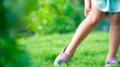 En Buenos Aires hay una oleada de mosquitos (Shutterstock)