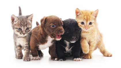 Es fundamental evitar que el cachorro tenga experiencias negativas en las etapas tempranas