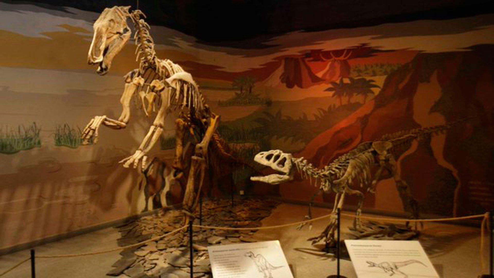 Museo de Ciencias Naturales Mar del Plata