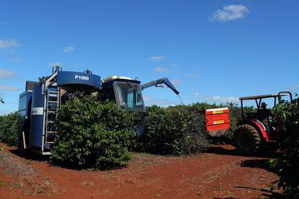 Una máquina de cosechadora de café en una plantación en la ciudad de Sao Joao da Boa Vista, en Brasil.