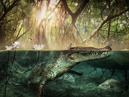 Los cocodrilos están entre las especies más traficadas en México (Foto: Europa Press/Universidad de Roma/Archivo)