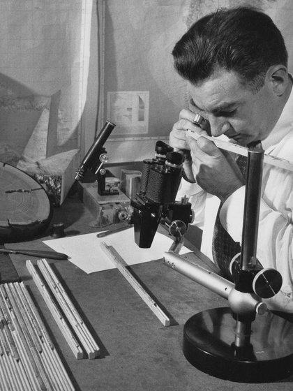 El famoso geólogo Donald Currey quien se lo conoció por haber descubierto el árbol más antiguo del planeta luego de haberlo matado en 1964