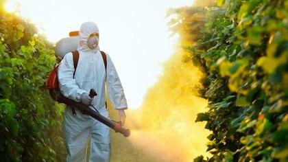 Gran parte de los vegetales y frutas que se consumen en el mundo tienen restos de herbicidas y pesticidas (iStock)