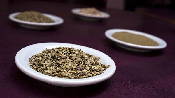 Argentina es el principal productor de yerba mate en el mundo (Adrián Escandar)