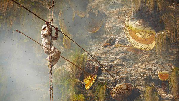 La travesía mortal para conseguir la única miel alucinógena del mundo