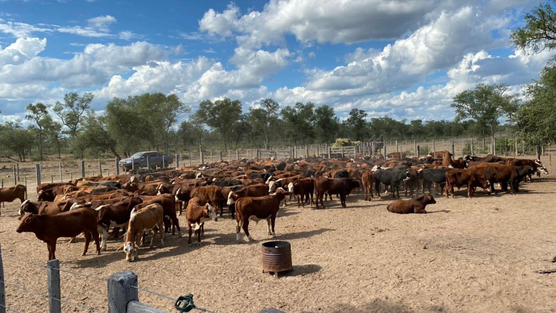 Alperovich Vacas robadas