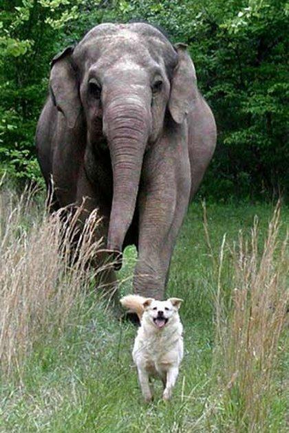 El vínculo entre ambas era tan estrecho que cuando Bella sufrió un accidente, el elefante no se movió de la puerta de la casa expectante por el reencuentro con su mejor amiga