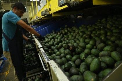 En mercados de mayores se puede conseguir el producto más barato (Foto: Cuartoscuro)