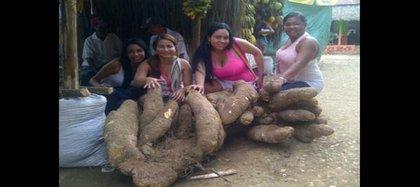 Súper ñame de 2013: 85 kilos que le valieron a su dueño, un campesino de Montes de María, Bolívar, el tricampeonato de los ñames más grandes de la región. Crédito El Heraldo.
