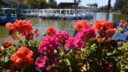 Las alegrías del hogar son una de las flores más características del Rosedal que actualmente están en naranja y fucsia. Para quienes quieran recorrer la isla, una de las principales actividades son los botes