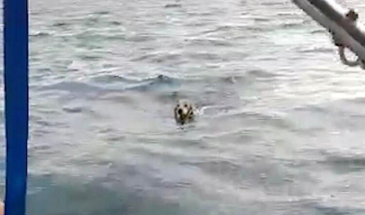 El perro llevaba horas nadando por su vida cuando fue rescatado por los pescadores