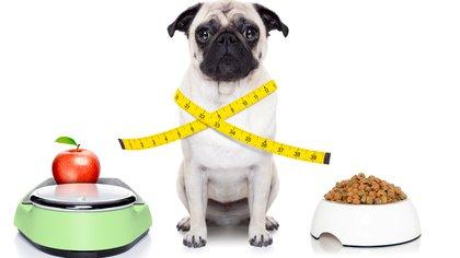 Una alimentación balanceada entre frutas, verduras, carne y alimento balanceado ayudan a un mejor crecimiento de los animales (Getty)