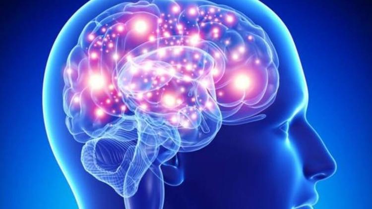 """Una científica argentina halló una región clave de la """"memoria RAM ..."""