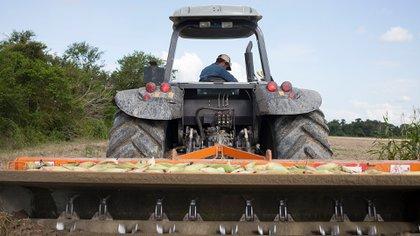Un tractor limpia un campo de maíz sin sembrar debido a la falta de semillas en Turen, en el estado de Portuguesa (Bloomberg)