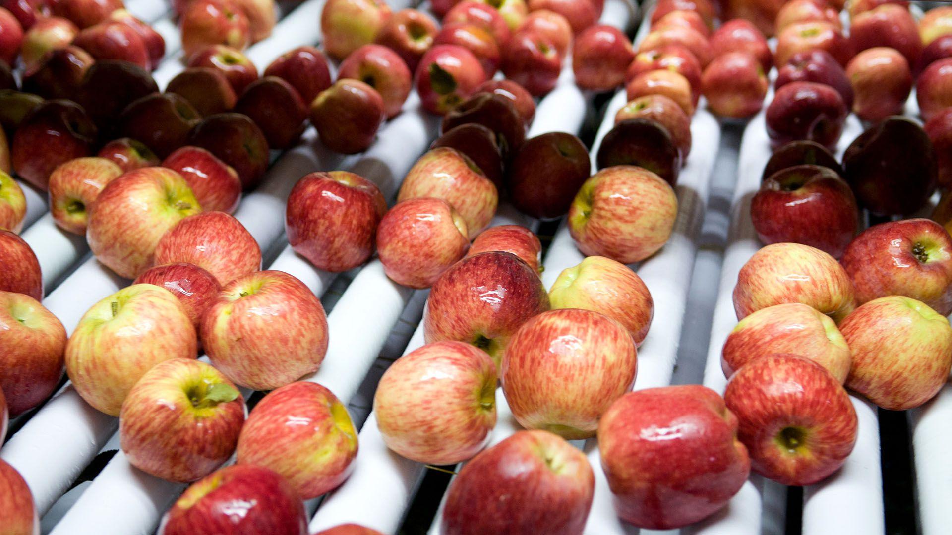 La manzana roja, que suele ser de los productos con más brecha, pasó al cuarto lugar bajando de 15,8 veces en el primer mes del año a 8,8 veces en el segundo, a causa del ingreso de la nueva cosecha, indicó CAME.