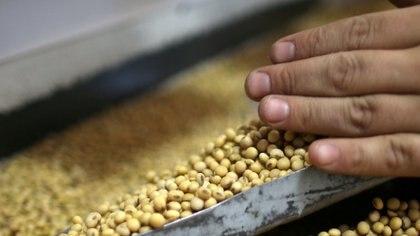 La expectativa oficial es que ingresen por soja USD 18.500 millones en el año