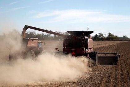 En 2020 la soja promedió USD 349 por tonelada. Esta mañana cayó a poco menos de USD 493 en Chicago. Foto: REUTERS/Enrique Marcarian