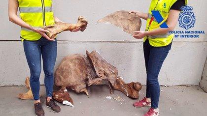 La Dirección General de Aduanas (DGA) evitó el contrabando de fósiles de dinosaurios y otras piezas paleontológicas pertenecientes a un museo privado que tenían como destino España. Foto: Prensa Dirección General de Aduanas/Télam/CBRI.