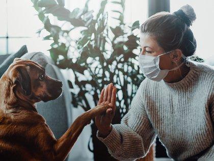 Veterinarios analizaron en Canadá las mascotas de un grupo de personas con diagnóstico positivo de COVID-19 (Shutterstock)