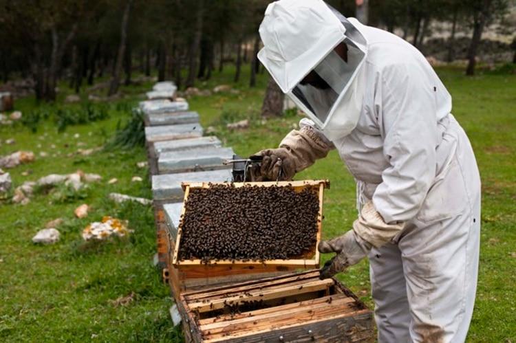 El aumento en el uso de pesticidas se ha considerado uno de los factores que están matando al insecto (Foto: Greenpeace)
