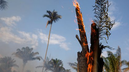 Incendios en la Amazonía (Reuters)