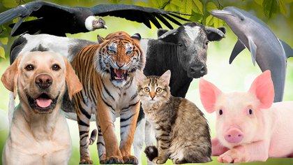 Día Internacional de los derechos animales.