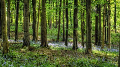 La Carta del Bosque se promulgó en 1217 en Inglaterra