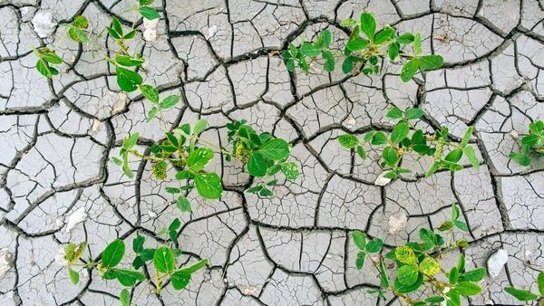 Segúnlas estimaciones del modelo también se construyen indicadores de pérdida futura: el valor a riesgo de la producción de soja y el valor de la máxima pérdida esperada
