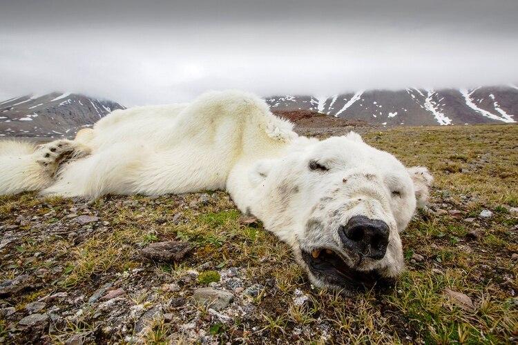 Expertos de la ONU afirman que gran parte de la naturaleza ya está perdida y lo que queda continúa en declive