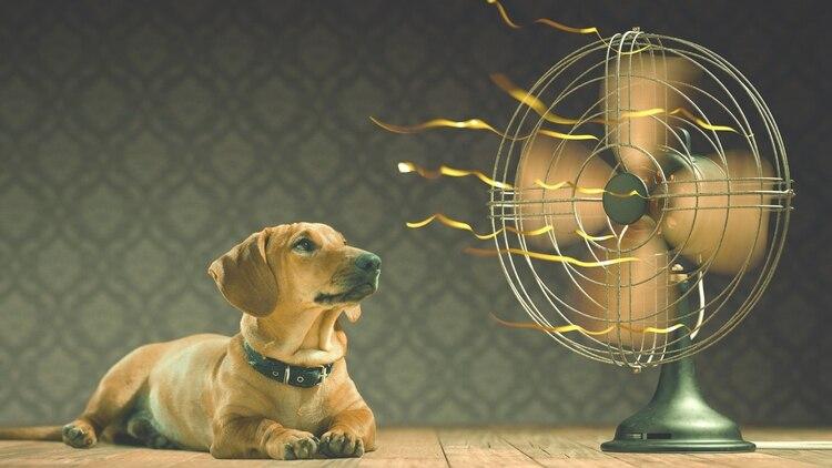 Algunas razas tanto de gatos como de perros son más propensas, por su pelaje y peso, a sufrir golpes de calor (iStock)