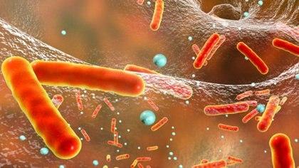 Hay personas que son más susceptibles de infectarse y otras que al tener contacto con el bacilo logran salir indemnes (Getty Images)