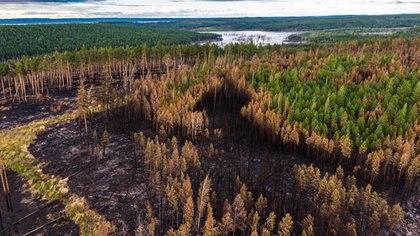 La Siberia, conocida por sus gélidas temperaturas, también sufrió incendios y olas de calor (Reuters)