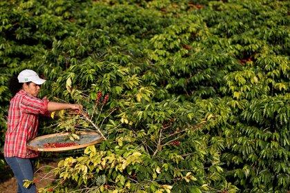 Las organizaciones internacionales piden un mayor acceso de las mujeres rurales a la propiedad de la tierra (EFE)