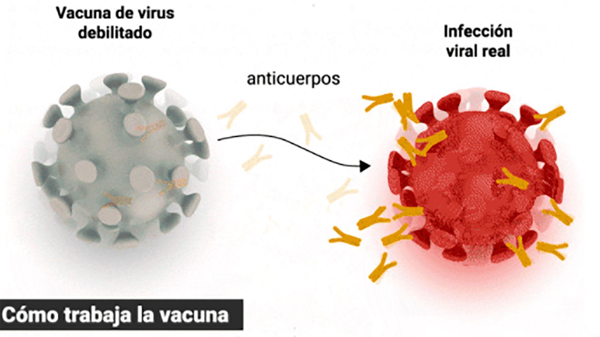 Cómo funciona la vacuna ARN Mensajeros de Pfizer