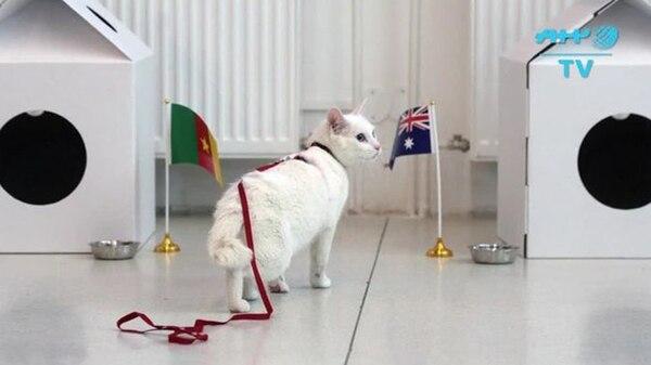 El gato Aquiles en acción, durante la Copa Confederaciones