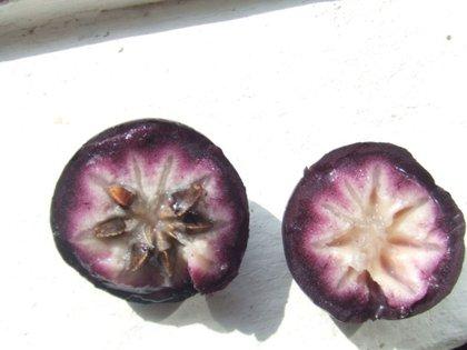 Foto: (Wikipedia Chrysophyllum cainito)