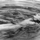 Hedy Lamarr Ekstase / Ecstasy - 1932 Director: Gustav Machaty Shutterstock