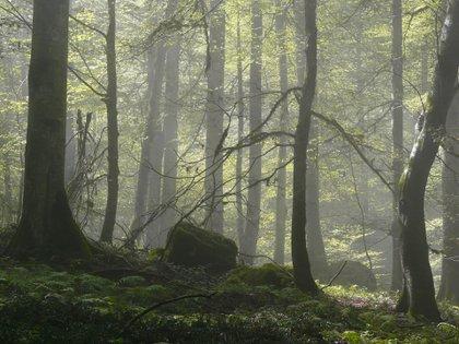 En este bosque se encuentra una amplia diversidad de flora y fauna que convierte en un sitio único al lugar (UNESCO)