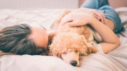 Cuán parecidos son los sentimientos de los perros a los de los humanos