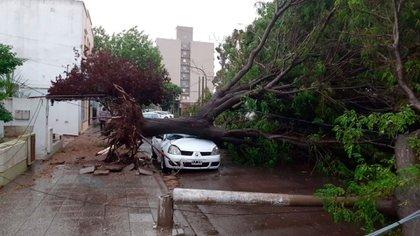 El temporal volteó árboles y rompió vehículos