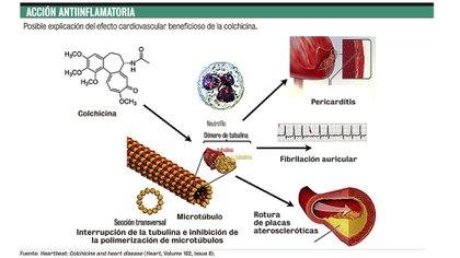 La acción antiinflamatoria de la colchicina
