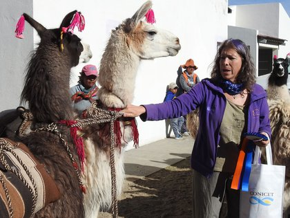 Bibiana Vilá recuperó el modo de esquilar de las vicuñas y contribuyó al desarrollo social y económico de la Puna, con un modelo que fue reconocido internacionalmente.(Yanina Arzamendia)