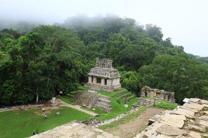 Vista del Templo del Sol desde el Templo de la Cruz. Estos dos sitios forman parte de un conjunto que fue el centro ceremonial más importante de Palenque. (Foto: Fernando Guarneros Olmos/Infobae México)
