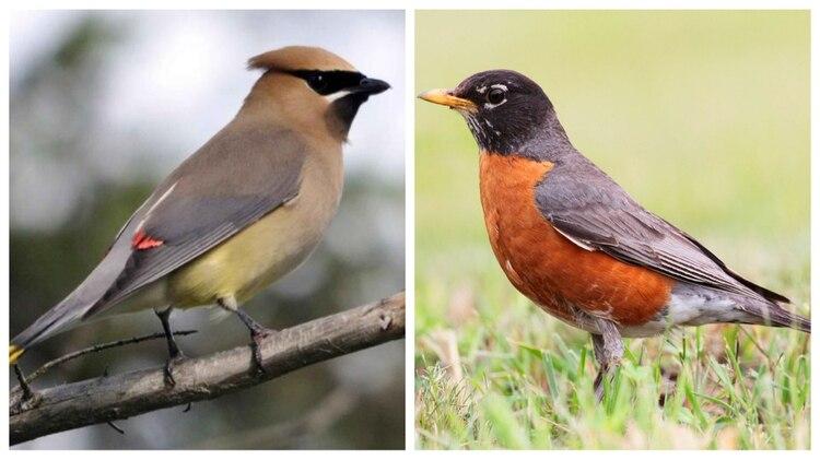 Estas son las dos especies de aves que murieron en 1987 (Foto: Especial)