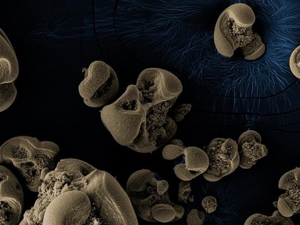 La nueva tecnología alimentaria utiliza hongos para elaborar colorantes naturales - HANG YU/CALTECH