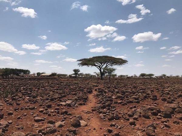 """El segundo lugar fue para Brian Grasso (EE.UU) con la foto """"Church Tree"""" (Árbol de iglesia) que tomó con un iPhone 7, en Maasailand, Kenia."""